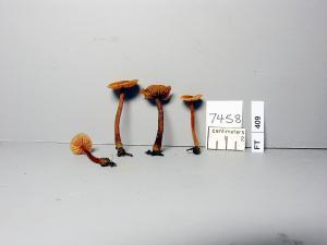 GMM7458